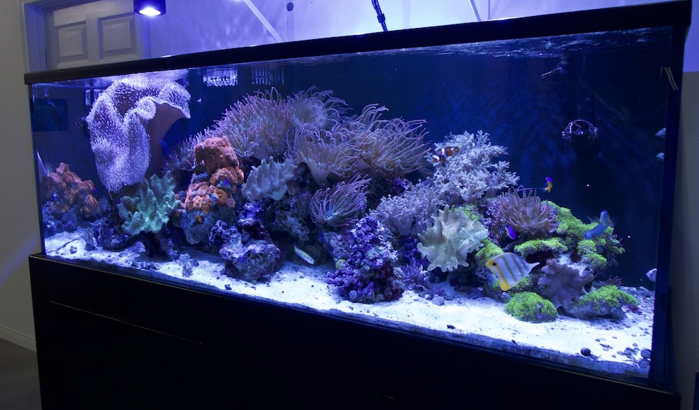 fish tank with coral and aquatic life