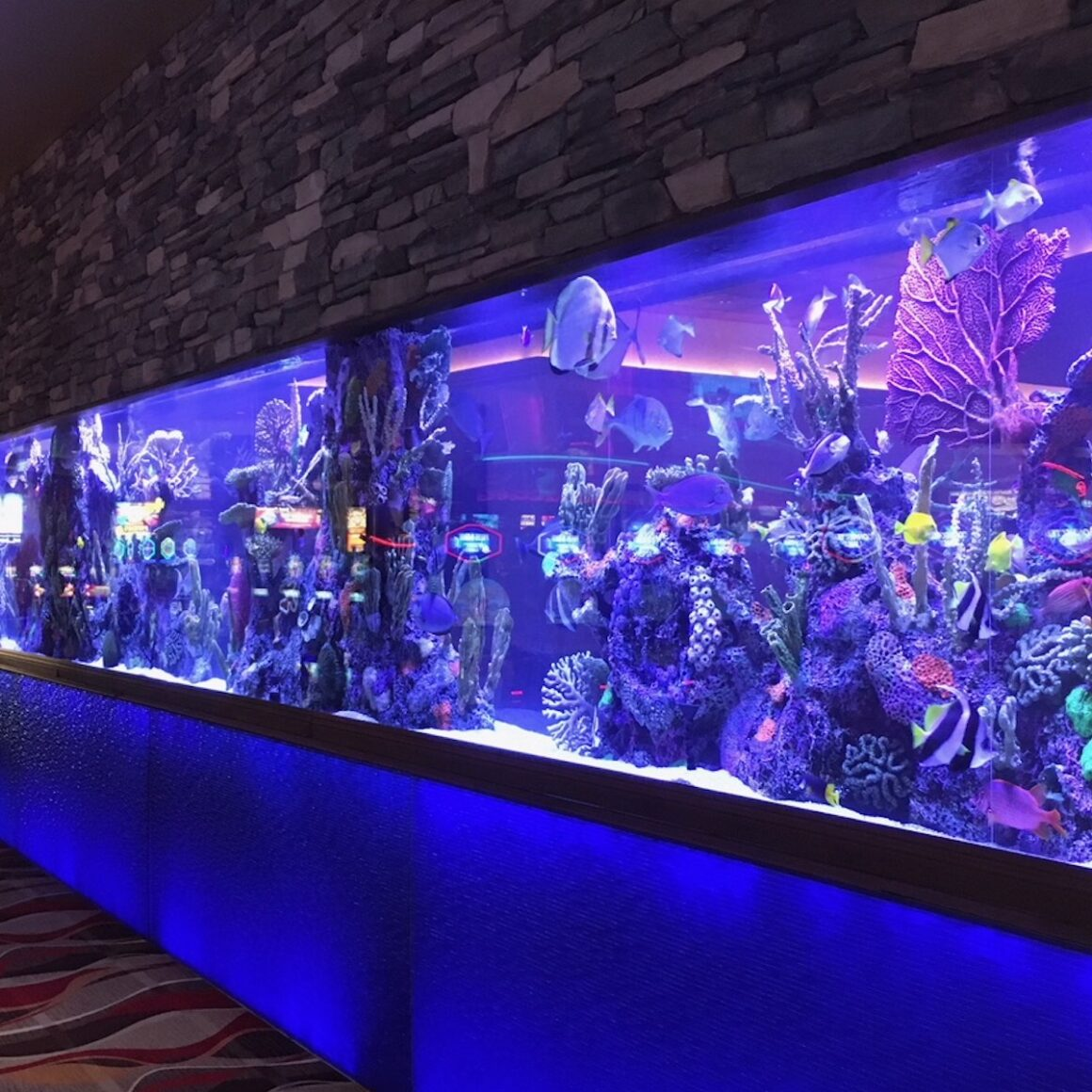 custom aquariums in wall at casino